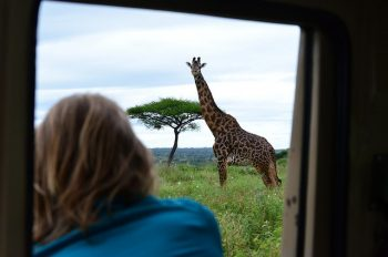 Marcelle Hopkins Giraffe PC Hannah Tanzania medium copy